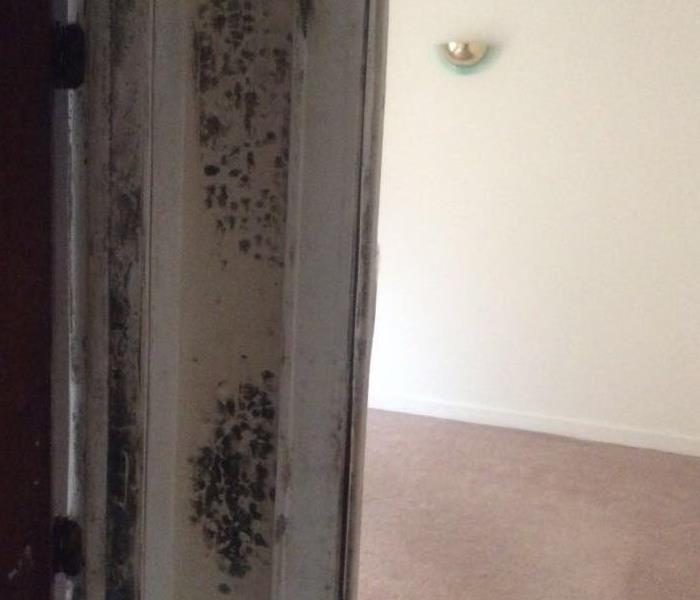 Mold Remediation in Cleveland, OH